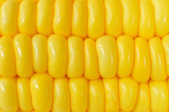 Close up of corn as background.  Stock Photos