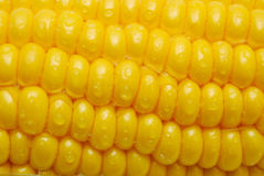 Close up of corn cob Royalty Free Stock Photo