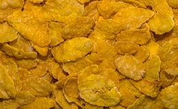 Close-up of corn flakes Royalty Free Stock Photo