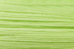 Close up of corn leaf texture. Royalty Free Stock Images