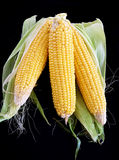 Close-up of corn organic vegetable food Royalty Free Stock Image