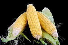 Close-up of corn organic vegetable food Royalty Free Stock Photos