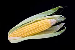 Close-up of corn organic vegetable food Royalty Free Stock Photo