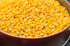 Close up of the corn seeds Royalty Free Stock Photography