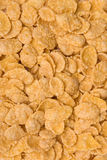 Close-up of cornflakes royalty free stock photography