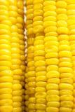 Close-up corns Stock Photos
