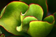 Close up corso da flor foto de stock