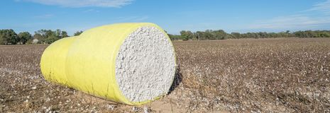 Close-up cotton bales on harvested field in Texas, USA. Panorama row of round bales of harvested fluffy cotton wrapped in yellow plastic under cloud blue sky royalty free stock photography