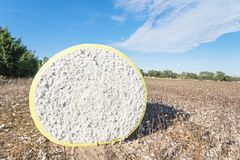 Close-up cotton bales on harvested field in Texas, USA. Close-up round bale of harvested fluffy cotton wrapped in yellow plastic under cloud blue sky. Captured stock photos