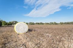 Close-up cotton bales on harvested field in Texas, USA. Wide angle view round bale of harvested fluffy cotton wrapped in yellow plastic under cloud blue sky stock images