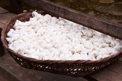 Close up of cotton balls drying in a basket Royalty Free Stock Photo