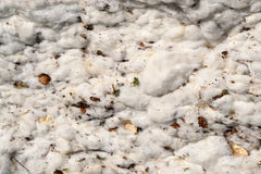 Close-up of a Cotton Module Royalty Free Stock Images
