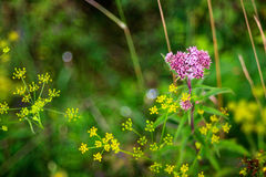 Close up of countryside flowers Royalty Free Stock Images