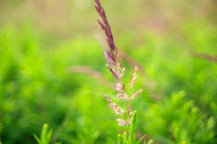 Close up of countryside grass Stock Image