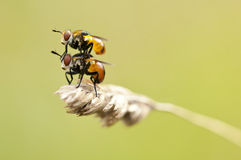 Close up of couple fly on a grass Stock Image