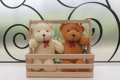 Close up -  Couple teddy bears in wood basket. Stock Photography