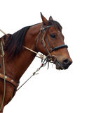 Close up of a Cowboy's Pony Showing the Tack Royalty Free Stock Photos