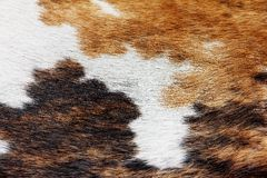 Close up of cowhide background Royalty Free Stock Images