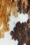 Close up of cowhide background portrait Stock Images