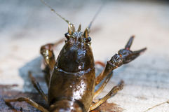 Close-up on a crab. Shallow depth of field Stock Images