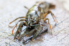 Close-up on a crab. Shallow depth of field Stock Photos