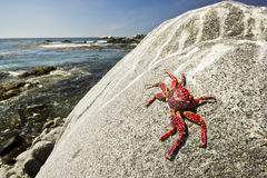 Close-up crab sitting on big stone near ocean beach Stock Photo