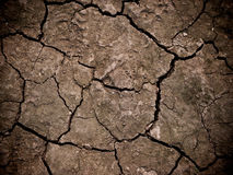 Close up of the cracked ground, dry soil texture Stock Images