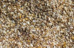 Close-up cracked sea-shells Stock Photos