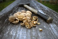 Cracked walnuts on rustic wooden board. royalty free stock photo