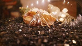 Craft crab made of blow glass. Close up craft crab made of blow glass Stock Images