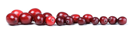 Close-up of cranberries on white background Royalty Free Stock Image