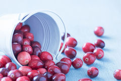 Close up of Cranberries in a white fallen over bucket Royalty Free Stock Photography