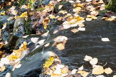 Close-up of a creek with rocks. Smooth movement of water. Water stream of a creek with leaves. Stopped by the movement of water. Close-up Royalty Free Stock Photography
