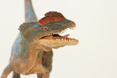 A Close Up of a Crested Dilophosaurus Dinosaur Royalty Free Stock Photo