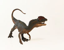 A Close Up of a Crested Dilophosaurus Dinosaur Royalty Free Stock Images