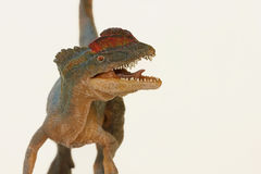 A Close Up of a Crested Dilophosaurus Dinosaur Stock Photos