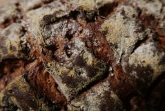 Close-up of cross hatch marks on loaf of artisanal bread. Close-up of cross hatch marks on loaf of artisanal walnut bread Royalty Free Stock Photography