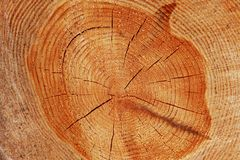 A close-up of the cross-section of the stumps, showing the aging circles, the texture of the tree.  Stock Photography