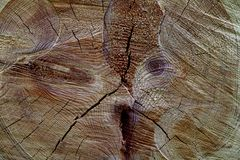 A close-up of the cross-section of the stumps, showing the aging circles, the texture of the tree.  Royalty Free Stock Image