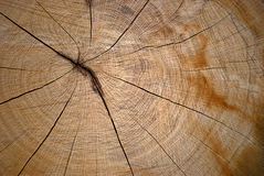Close up of cross section of tree Stock Image