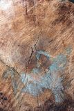 Close up of cross-Section of tree royalty free stock photo