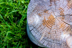 Close up of a cross section of a tree stump on the grass. Cross section log on the green grass. texture Royalty Free Stock Photo