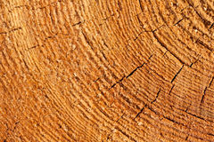 Close up cross section of tree trunk showing growth rings, texture Stock Photography