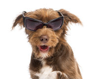Close-up of a Crossbreed, 5 months old, wearing sunglasses Royalty Free Stock Images