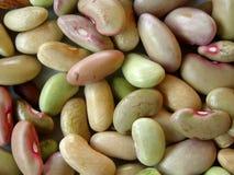 Close-up cru dos feijões Planta natural Fotografia de Stock