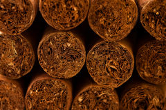 Close up of Cuban cigars Stock Photography