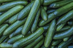 Close Up Of Cucumbers. Close Up Of Many Cucumbers royalty free stock image