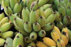 Close up of cultivated bananas or Thai bananas bunch royalty free stock photo
