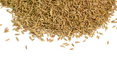 Close up of cumin seeds Stock Image