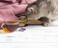 Close-up of a cup of tea, open book and grey cat on white wooden background. Free copy space.